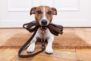 What Happens to my Pets in a Divorce?, pets, divorce, illinois divorce attorney, division of property, martial assets